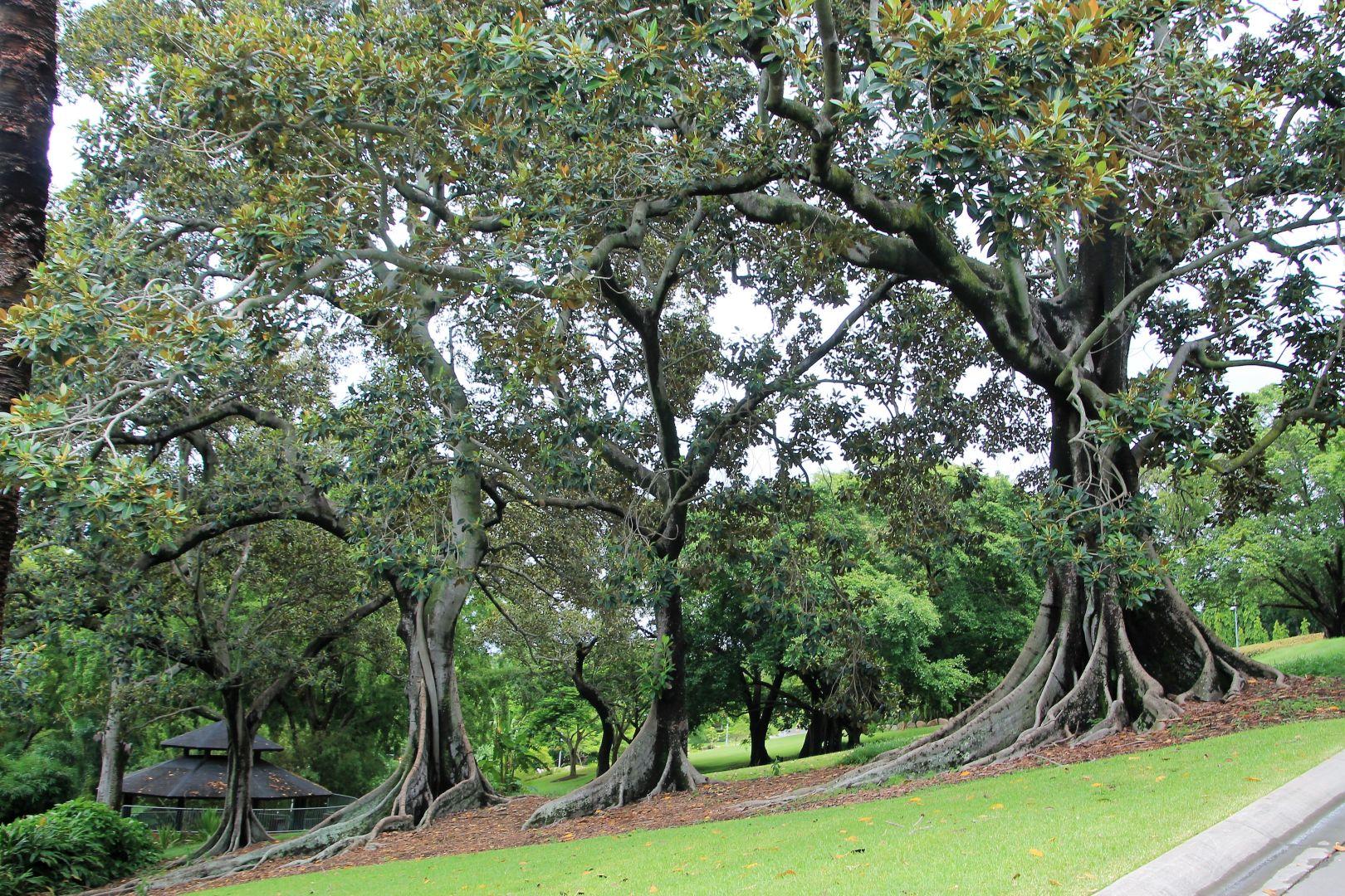 Brisbane-Botanical-Gardens-1