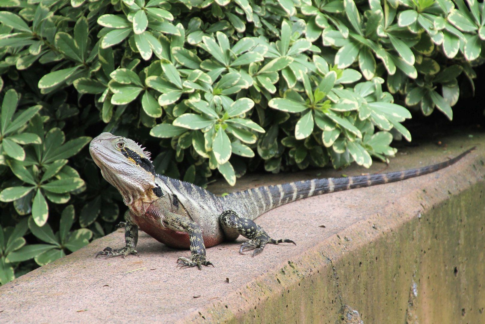 Brisbane-Botanical-Gardens-5
