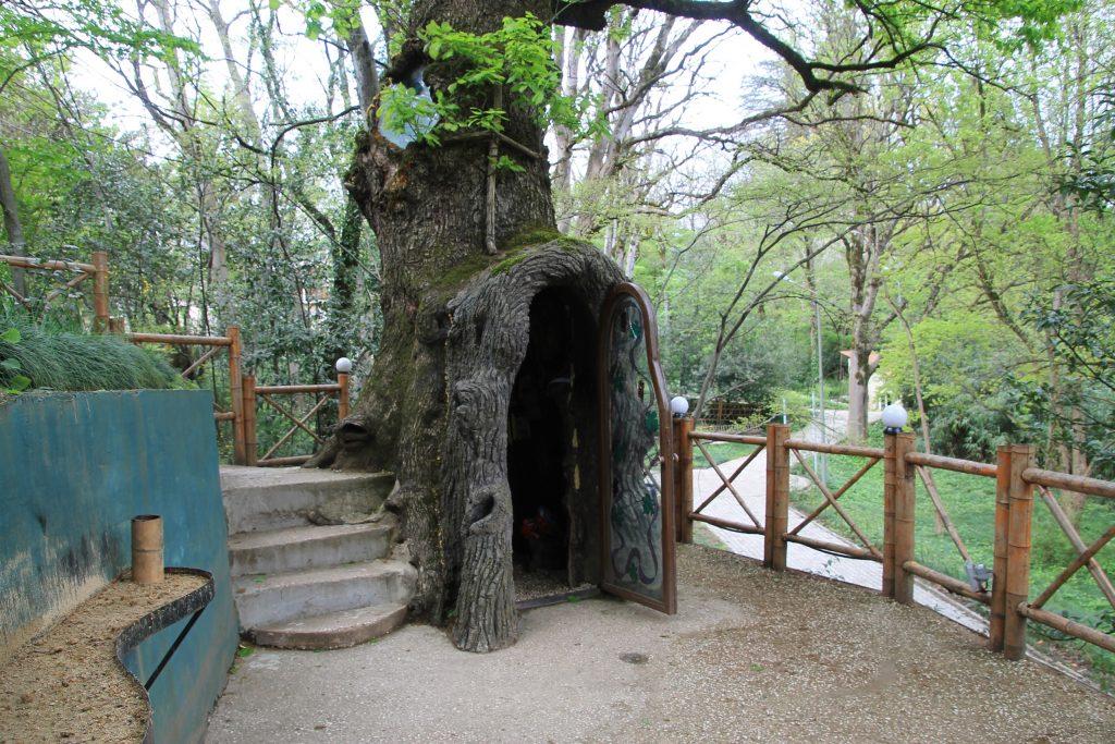 Tree Trunk in Botanical Garden