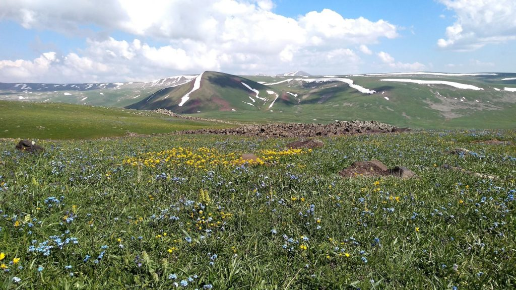 Wild flowers everywhere in the lower fields of Gehama Mountains