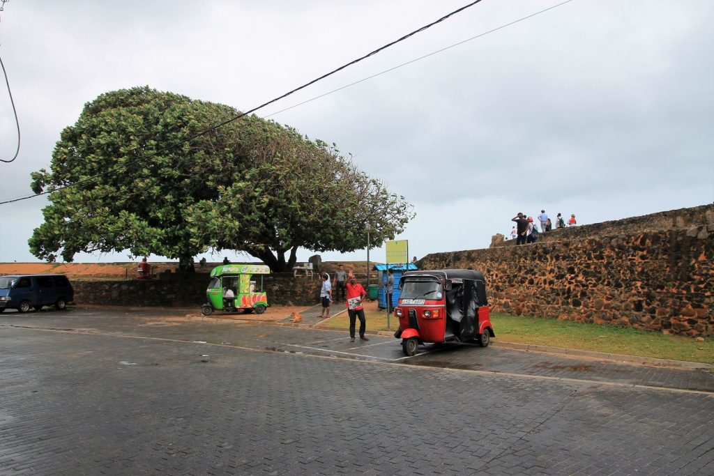 The wind has shaped the tree at the forts seaside wall, Galle Fort
