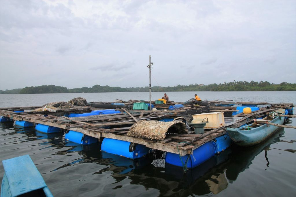 Fish farm at the lagoon